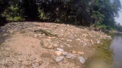 A running Iguana