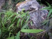 A snake in Rio Claro