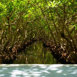 The mangrove tunnel