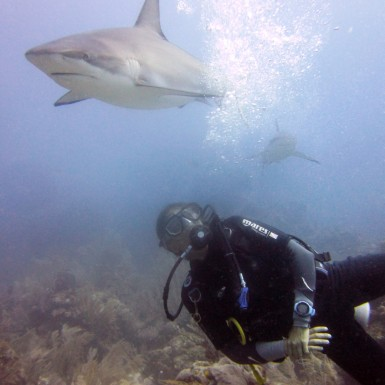 Among the caribbean reef sharks