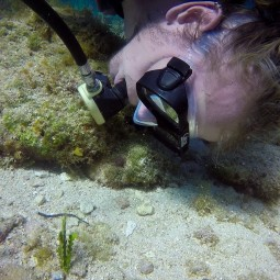 Checking out a pipefish